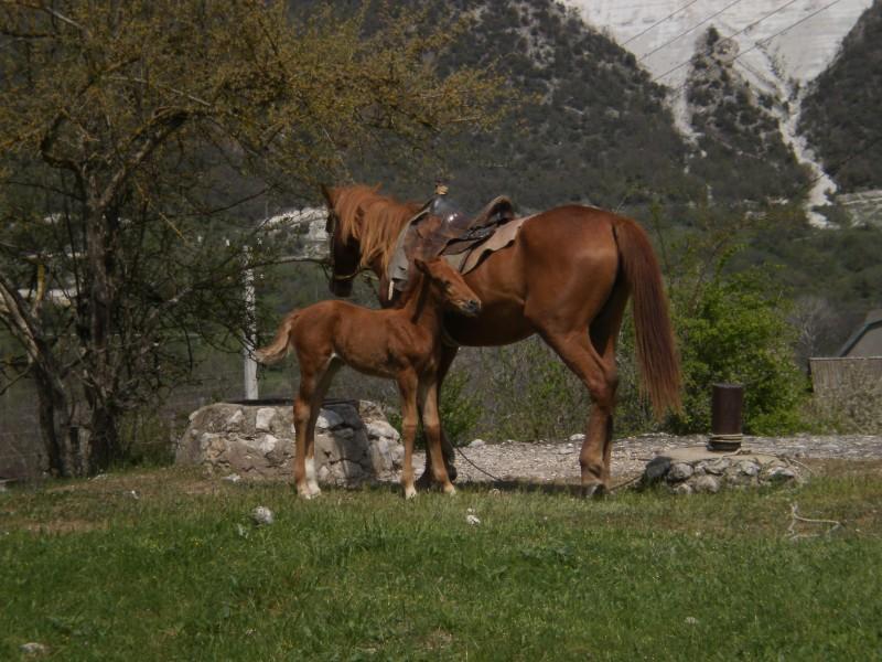 Лошади в Большом Садовом.