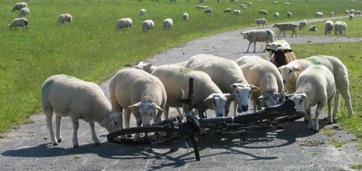Опасные животные для велосипедиста