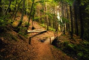 Пеший поход в Карпаты – Водопадами Горган