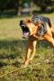 Велосипедисты и агрессия собак, как вести себя велосипедисту при встрече с собакой.