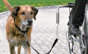 На велосипеде с собакой.
